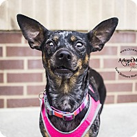 Adopt A Pet :: Lucy [BONDED PAIR - LIL BIT] - Mooresville, NC
