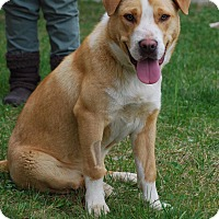 Adopt A Pet :: Whistle - Coeburn, VA