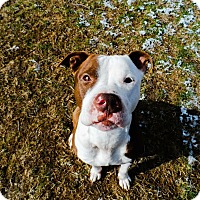 Adopt A Pet :: Dixon - Dayton, OH