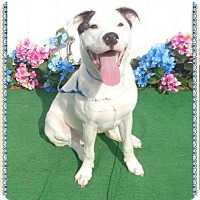 Adopt A Pet :: SCAMP - Marietta, GA