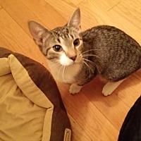 Adopt A Pet :: Rocky (FCID# 01/16/2017 - 204 Foster) - Greenville, DE