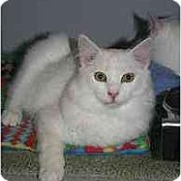 Adopt A Pet :: Twilight - Marietta, GA