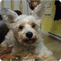 Adopt A Pet :: Tasha - Rigaud, QC