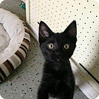 Adopt A Pet :: Vivienne - Eagan, MN