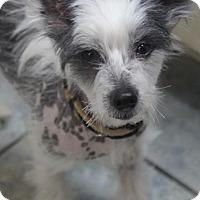 Adopt A Pet :: Max - Yuba City, CA
