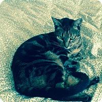 Adopt A Pet :: Kit - Laguna Woods, CA