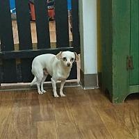 Adopt A Pet :: Oliver - Ball Ground, GA