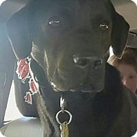 Adopt A Pet :: Bayou - Knoxville, TN