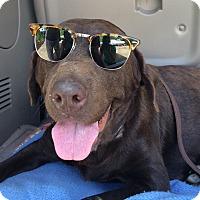 Adopt A Pet :: Roca - Huntsville, AL