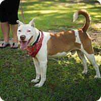Adopt A Pet :: Jasper - Daleville, AL