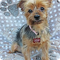 Adopt A Pet :: Charlotte - Encino, CA