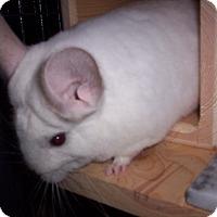 Adopt A Pet :: Dawn - Avondale, LA