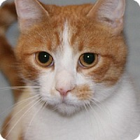 Adopt A Pet :: Johnny - Savannah, MO