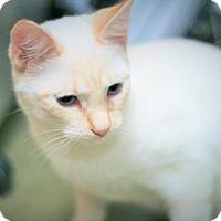 Adopt A Pet :: Cane - Cary, NC