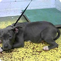 Adopt A Pet :: LEO - Atlanta, GA