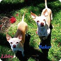 Adopt A Pet :: Libby - El Cajon, CA