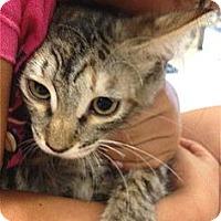 Adopt A Pet :: Sweet Pea - Schertz, TX