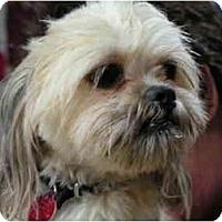 Adopt A Pet :: Tiga - Rigaud, QC