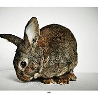 Adopt A Pet :: Hop - New York, NY