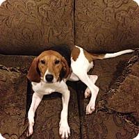 Adopt A Pet :: May - Bardonia, NY