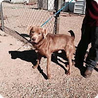 Adopt A Pet :: TOBY - Childress, TX