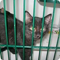 Adopt A Pet :: Eyore - Hamilton, ON