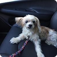 Adopt A Pet :: Sugar - Leesburg, FL