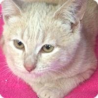 Adopt A Pet :: Chowder - Eureka, CA