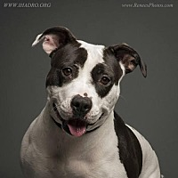 Adopt A Pet :: Sonya - Blacklick, OH