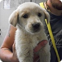 Adopt A Pet :: Ginger - Picayune, MS