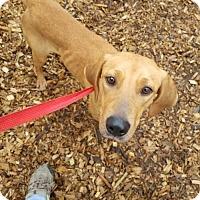 Adopt A Pet :: Amanda - Seattle, WA