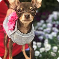 Adopt A Pet :: Pixie - Atlanta, GA