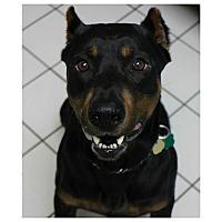 Adopt A Pet :: Logan - Forked River, NJ