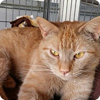Adopt A Pet :: Butterscotch - Templeton, MA