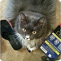 Adopt A Pet :: Smokey Jo Corbello - Lake Charles, LA