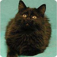 Adopt A Pet :: Frosty - Sacramento, CA