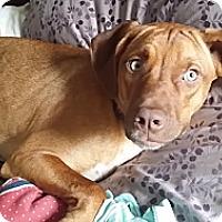 Adopt A Pet :: *Charley - Winder, GA