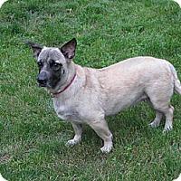 Adopt A Pet :: LITTLE JENNY