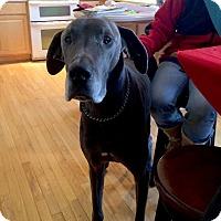 Adopt A Pet :: Caesar - Courtesy Listing - Manassas, VA