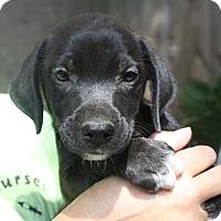 Adopt A Pet :: Rachel - Marion, AR