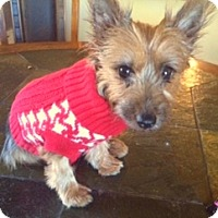 Adopt A Pet :: Stella - Beechgrove, TN