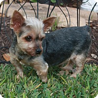 Adopt A Pet :: Mikey - Statewide and National, TX