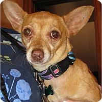 Adopt A Pet :: Novia - Salem, OR