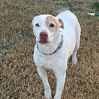 Adopt A Pet :: Chance - Nuevo, CA