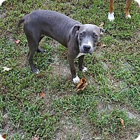 Adopt A Pet :: Penny - Franklin, VA