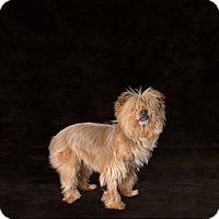 Adopt A Pet :: Gerber - Van Nuys, CA