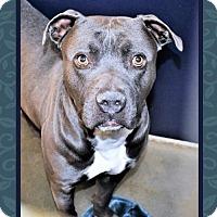 Adopt A Pet :: Clyde - San Jacinto, CA
