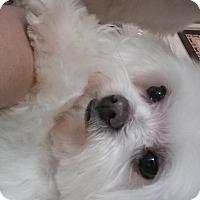 Adopt A Pet :: Nikkie - Crump, TN