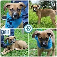 Adopt A Pet :: Kasie - Kimberton, PA