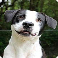Adopt A Pet :: HOOCH - Fort Walton Beach, FL